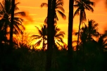 Lombok Sunset Palm Trees