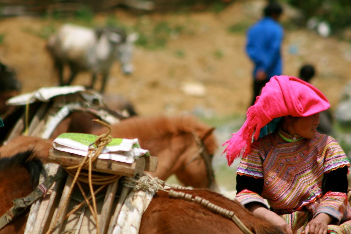 Bac Ha livestock auction